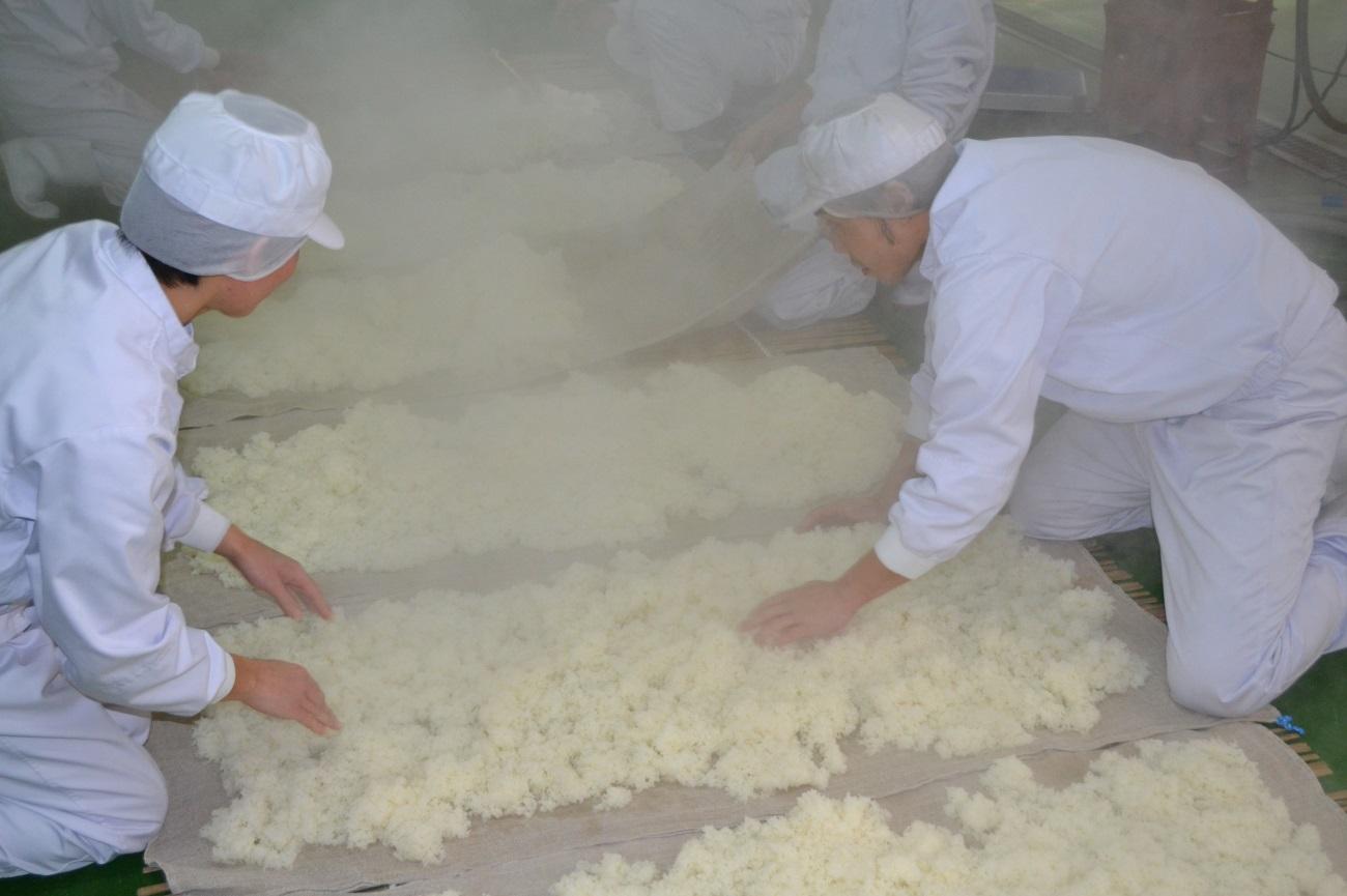 """蒸しあがったお米を冷ましています。"""""""